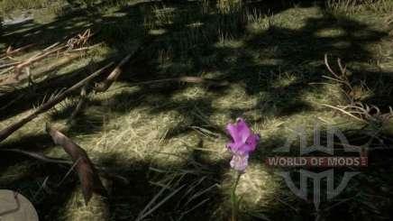 Orchidée de la bouche du Dragon dans RDR 2
