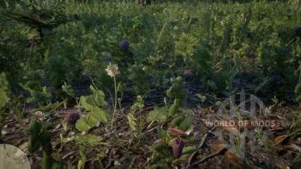 Sabot de la vierge de l'Orchidée de RDR 2