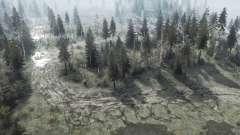 Les essences de bois rares