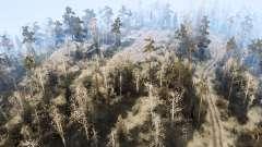 Région de la forêt