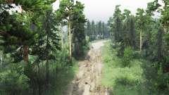 Reserviert Wald für Spin Tires