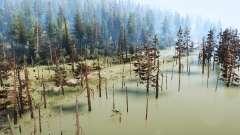 À travers le marais