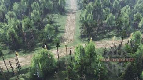 Der trockene Wald für Spin Tires