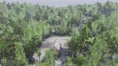 À travers la forêt