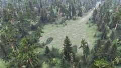 Forêt de jeu